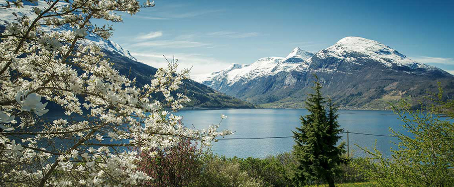 Springtime Scenery of the Fjordland